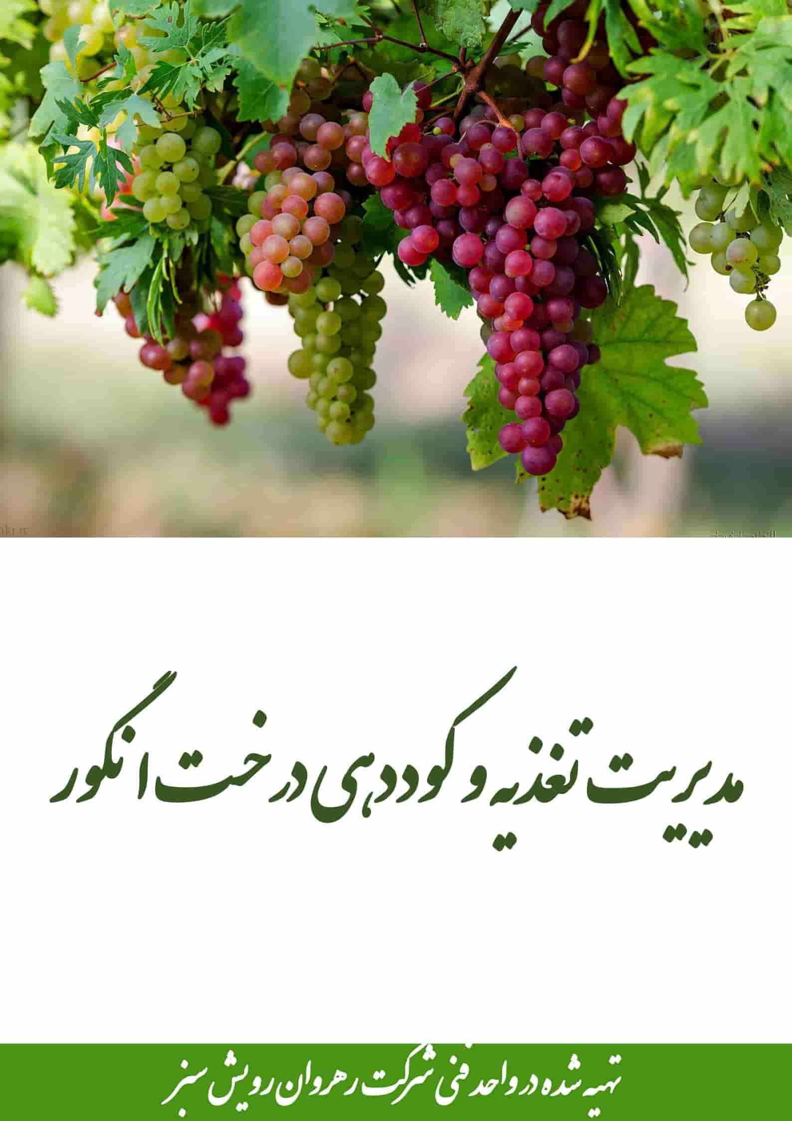 کوددهی درخت انگور