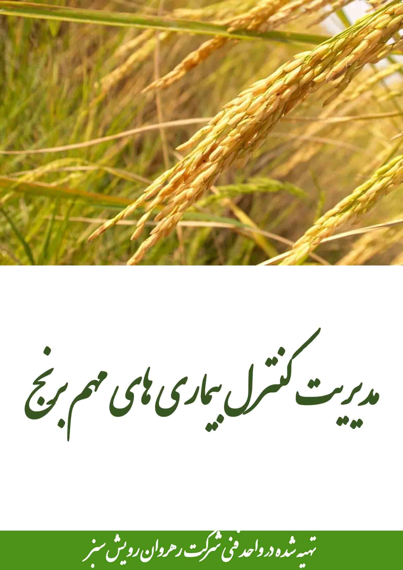 کنترل بیماری های مهم برنج