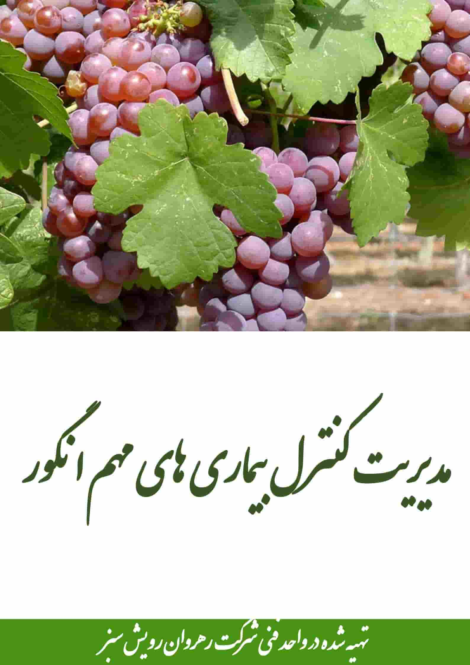 کنترل بیماری های مهم انگور