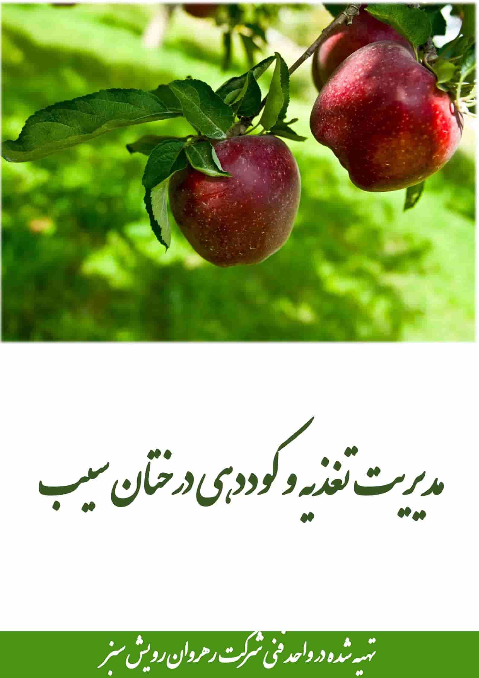 مدیریت تغذیه و کوددهی درخت سیب