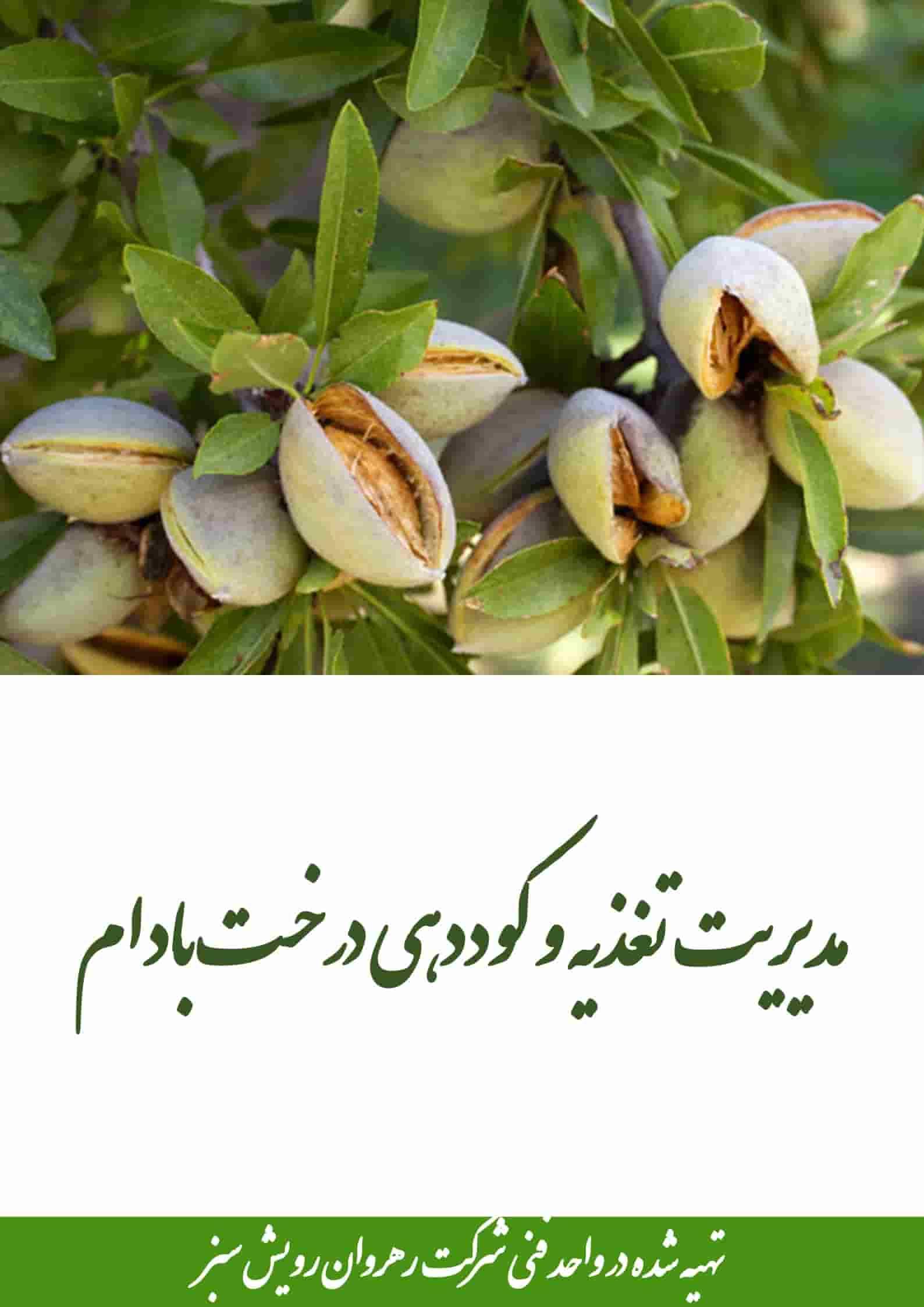 مدیریت تغذیه و کوددهی درخت بادام